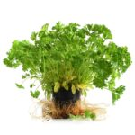 potteplanter uden potte