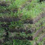 Græstørv
