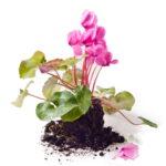 potteplante-med-jord